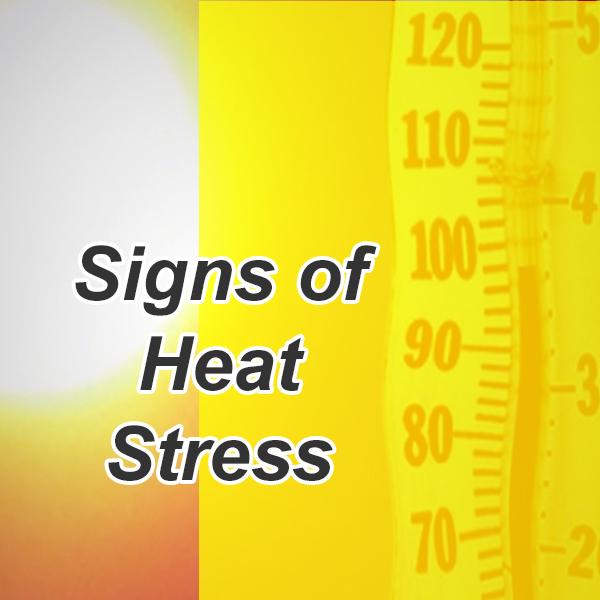heatstress.jpg