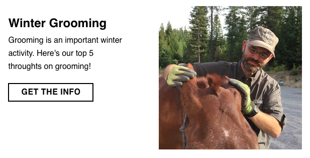 Winter horse grooming